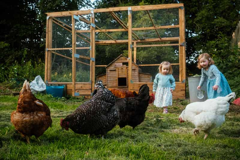 Children feed chickens